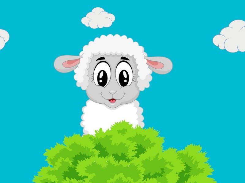 ovca ilustracija